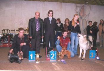 """Шанс Тюльпан на выставке """"Зимние узоры"""" 17 марта 2007 год Бест юниоров."""